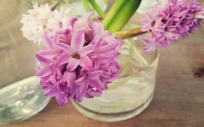 Hyacinths in store now